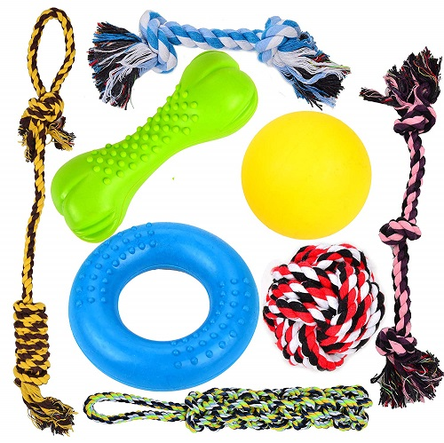 Best Dog Chew Toys to Get for Your Dog Now