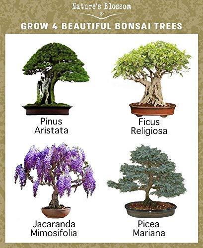 Nature S Blossom Bonsai Tree Kit Grow 4 Types Of Bonsai Trees