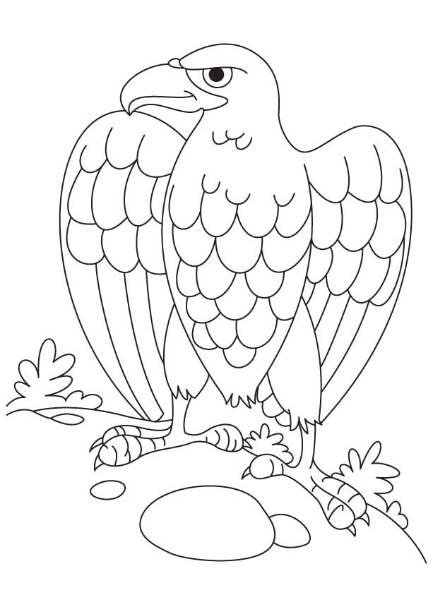 bald eagle coloring page download free bald eagle coloring page for