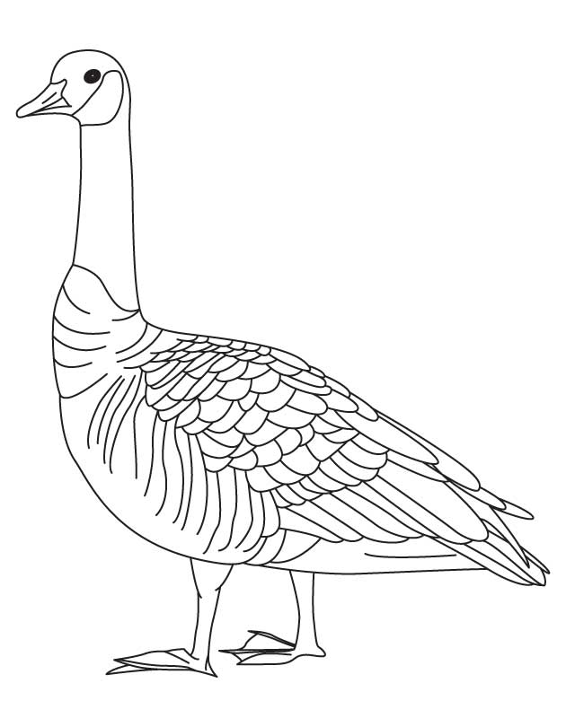 goose coloring page download free barren goose coloring page