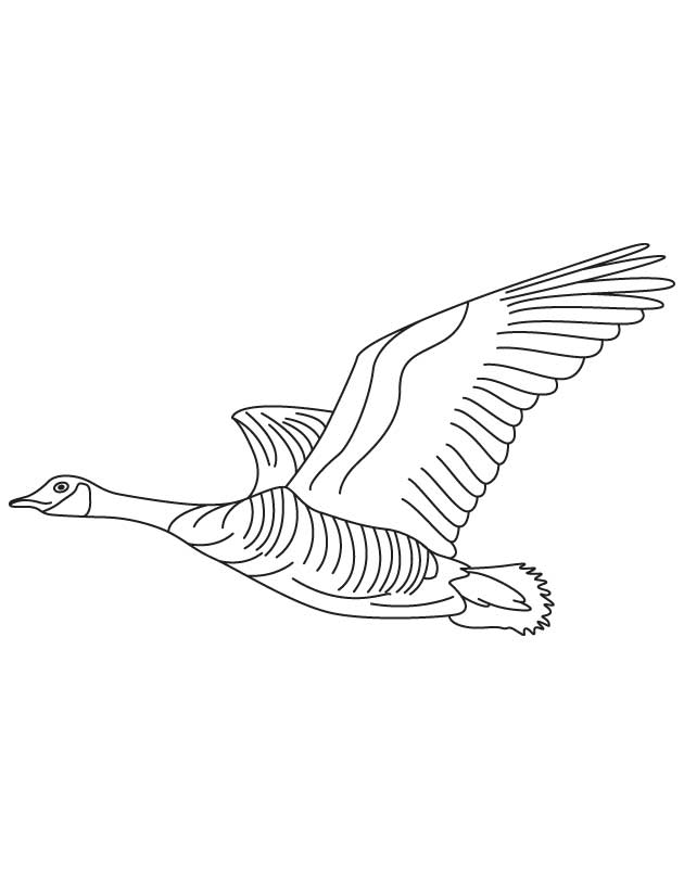 goose coloring page hicoloringpages