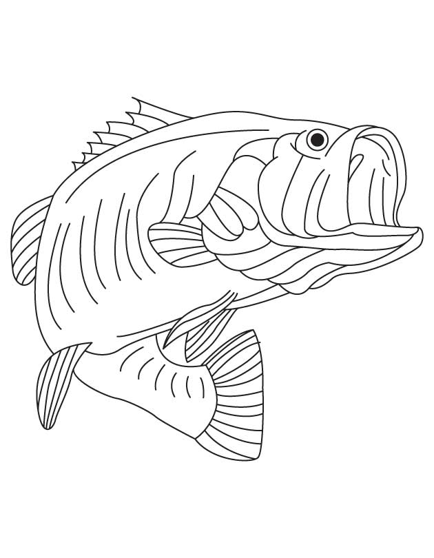 state freshwater fish largemouth bass for kids best coloring pages