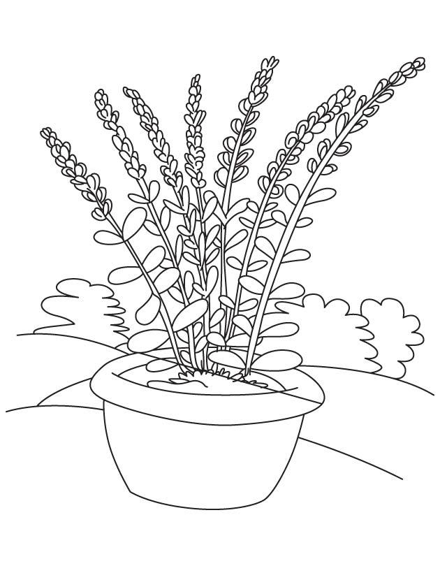 flower pot coloring page download free lavender flower pot coloring