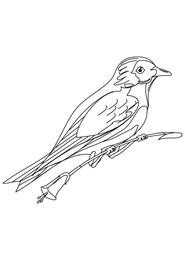 mountain bluebird coloring page download free mountain bluebird
