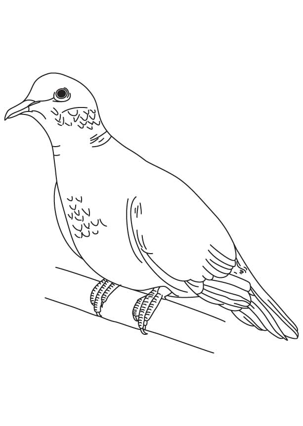 mourning dove coloring page download free mourning dove coloring
