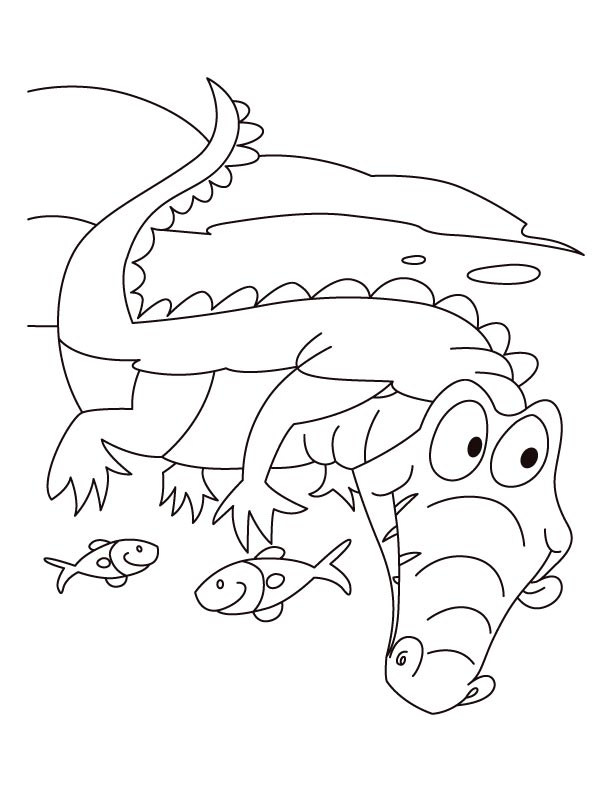 alligator motto live n let live coloring pages download free