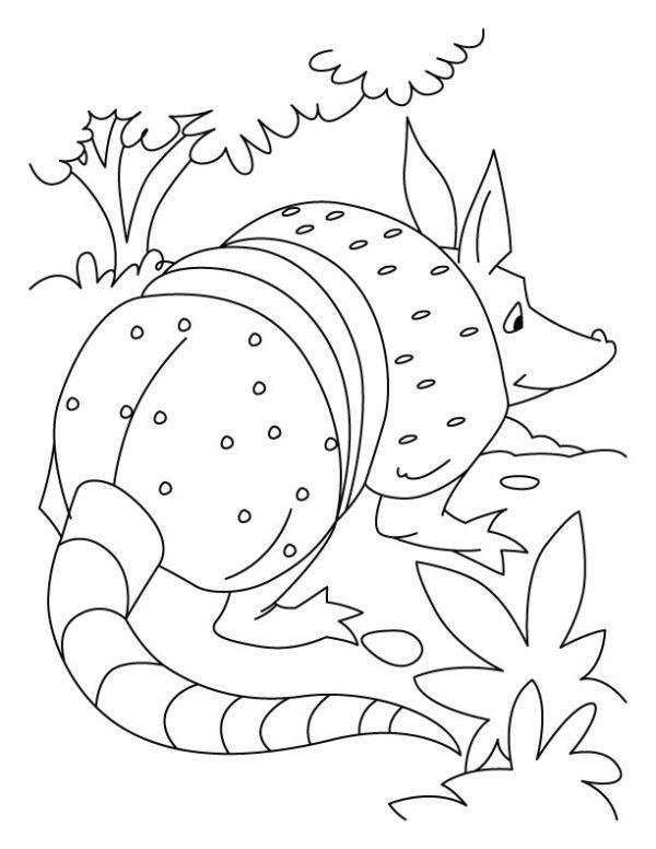 armadillo coloring page # 30