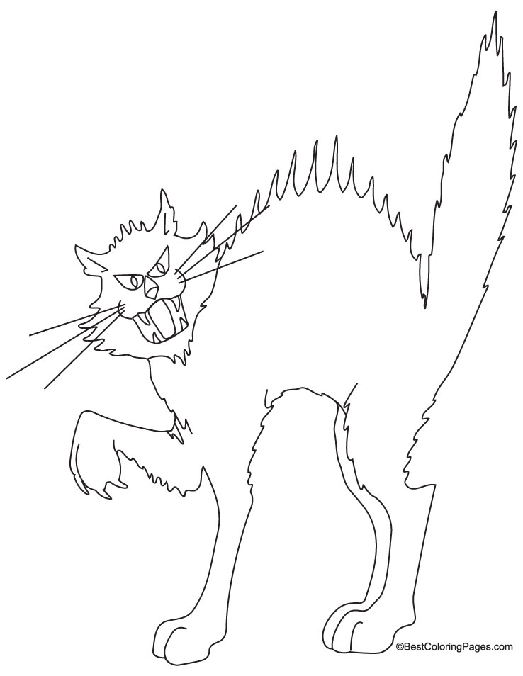 black cat coloring pages on halloween black cat coloring page