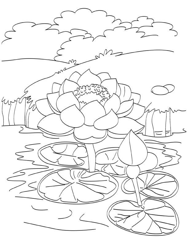 blooming lotus in pond coloring page download free blooming