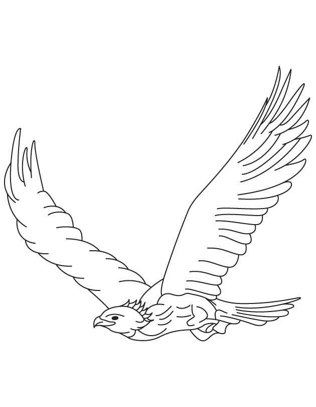 golden eagle in flight page