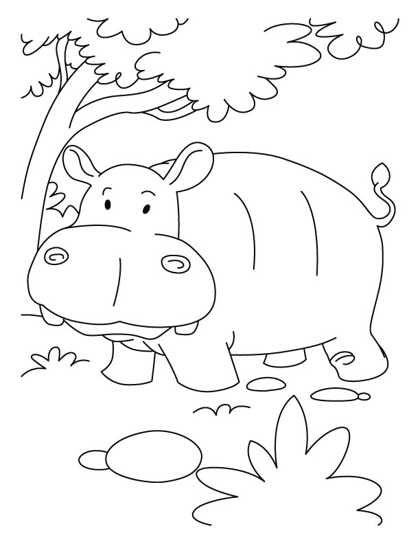 hippopotamus in jumgle coloring pages download free hippopotamus