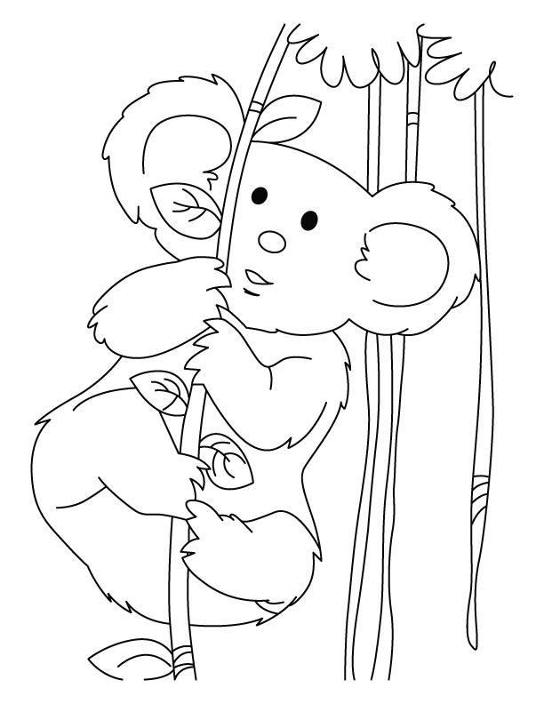 koala full of energy coloring pages download free koala full of