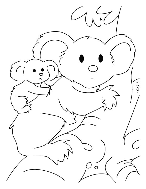 koala with joey coloring pages download free koala with joey