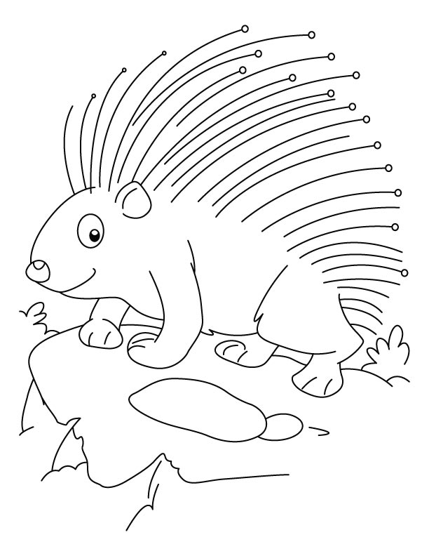 threatened porcupine coloring pages download free threatened