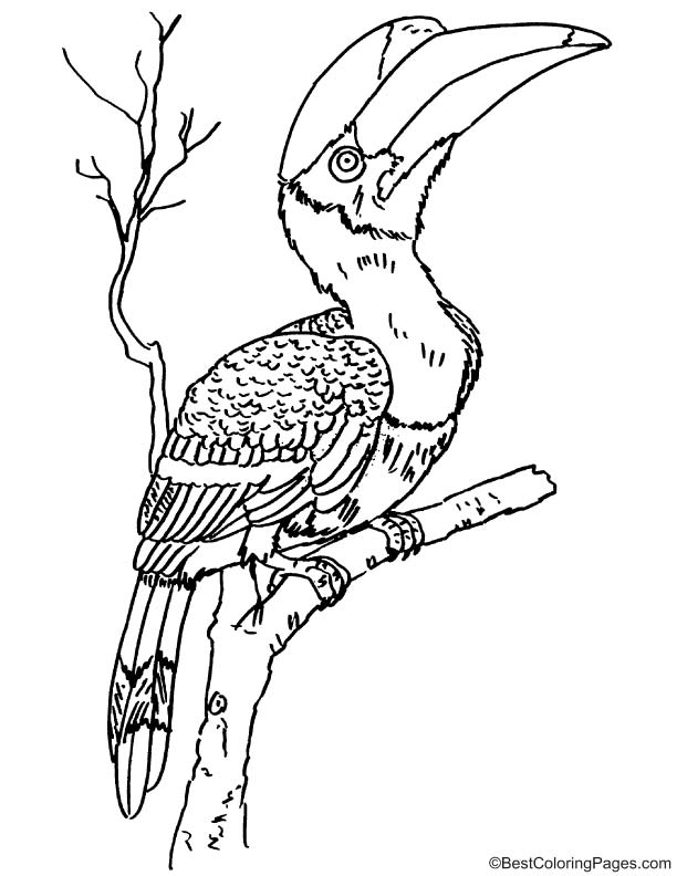 coloring page download free rhinoceros hornbill coloring page