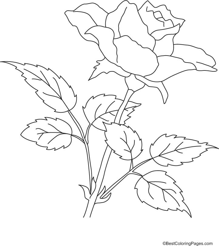 with petals