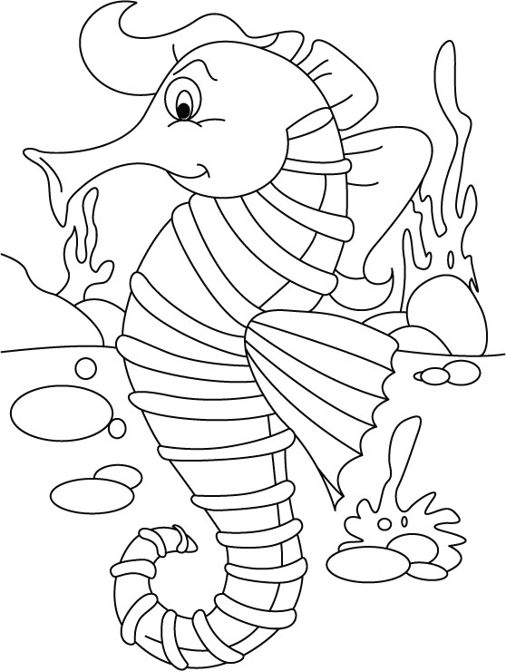 seahorse ordering no back biting coloring pages download free