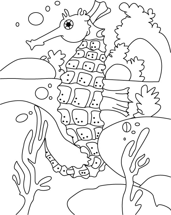 box seahorse coloring pages download free box seahorse coloring