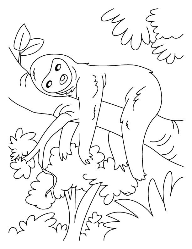 lazy sloth coloring pages  download free lazy sloth