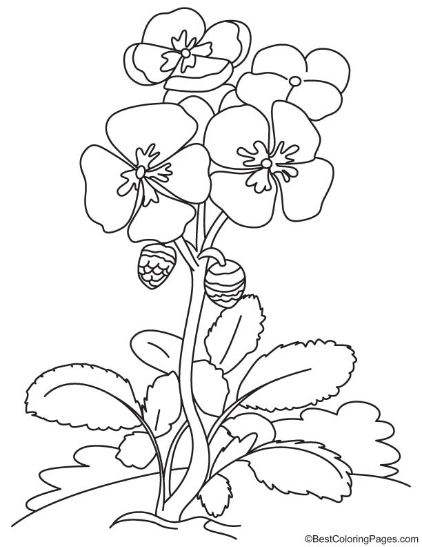 Spring Flowers Coloring Page Download Free Spring Flowers Coloring Page For Kids Best Coloring Pages