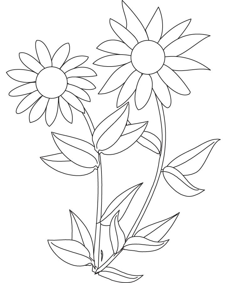 free coloring pages sunflowers cooloring com
