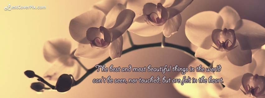 best thing in the world quotes fb cover