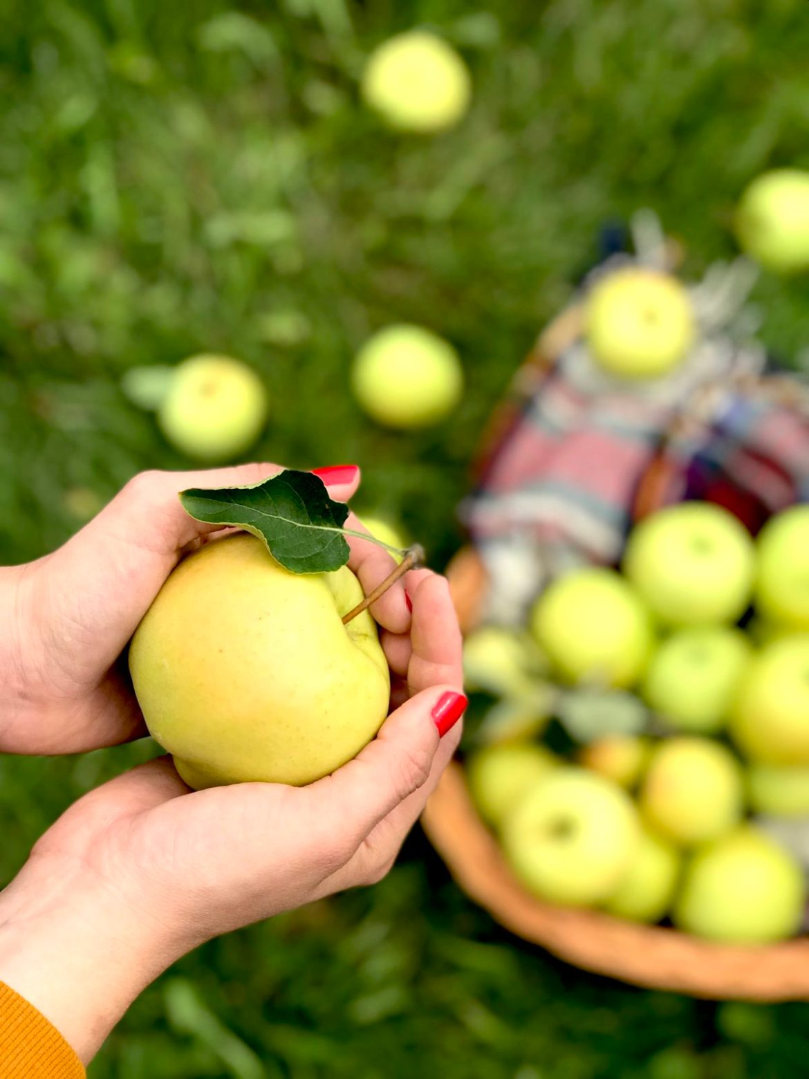 Go Apple Picking, Plus a Savoury Apple Salad and Boozy Cider Recipe for the Win