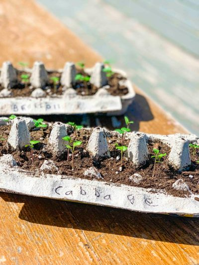 Start Growing Vegetables from Seeds