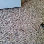 Nylon Berber Carpet Colors Best Decor Things
