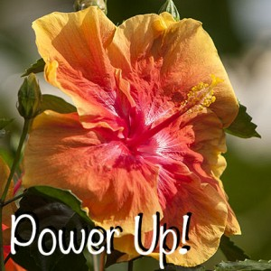 Power Up! ZV7L0490
