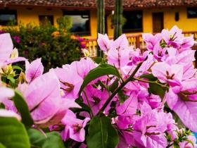 The Best Areas to Stay in San José, Costa Rica