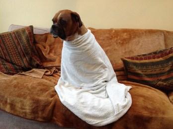 skin problems in boxer dog