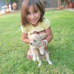 Malia Stray Puppies: 'Yoda'