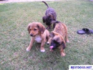 Dumped puppies