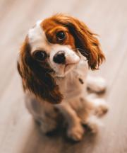 17 Signs Of A Bad Pet Sitter