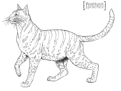 serval coloring page free printable coloring pages