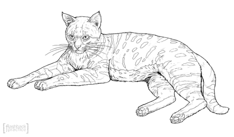 sand cat coloring page free printable coloring pages