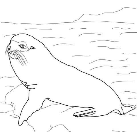 fur seal on the ice coloring page free printable coloring pages