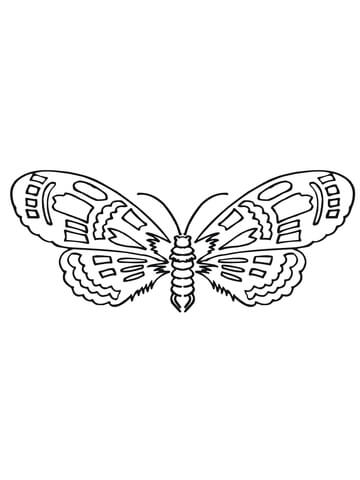 brahmeid moth coloring page free printable coloring pages