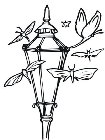 rothschilds silk moth coloring page free printable coloring pages
