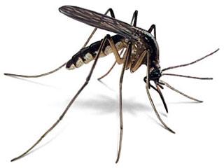 anti muggen spray