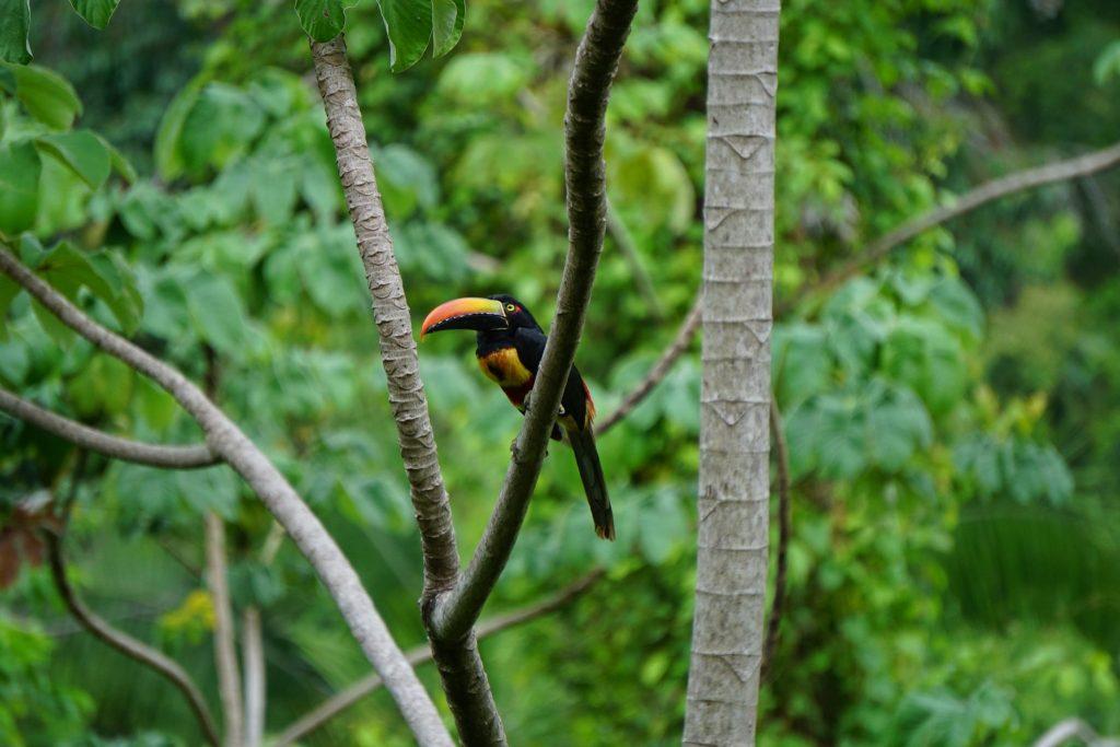 verzekering Costa Rica
