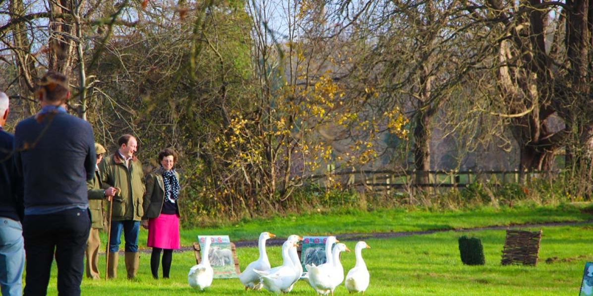 Garden Activities, Hever Castle, Prestigious Venues