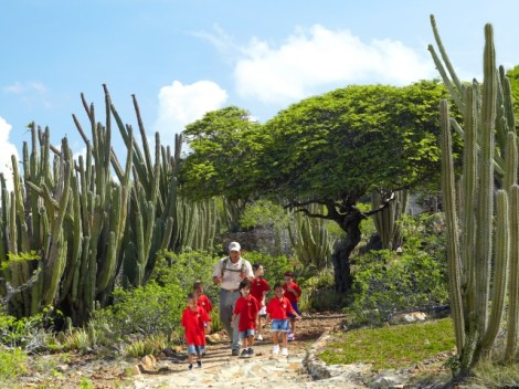 Kid Friendly Attractions in Aruba