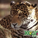 Why Mayan Riviera Family Vacations and Playa del Carmen are Ideal