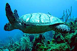 Dive-Sites-Turks-and-Caicos-Beaches-Resort2