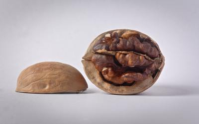 Eat walnuts if you want to be a Dad