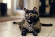 Feliway Cat Diffuser Review