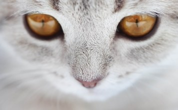 best cat litter for indoor cats
