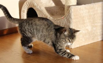 Best cat scratch posts